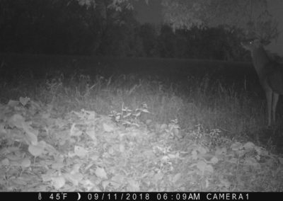 2018 - Trailcam - 435