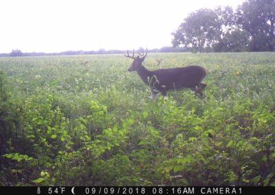2018 - Trailcam - 438
